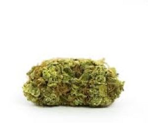Buy Chocolope Marijuana Strain UK